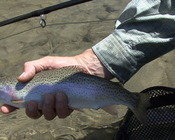 May 28 SF Boise with Dry Fly Innovations
