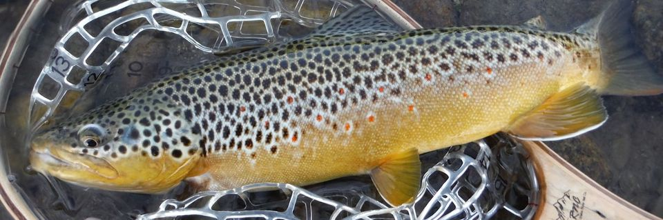 River Reports - Dry Fly Innovations