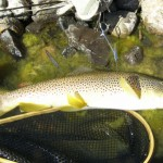 dry fly fish Idaho